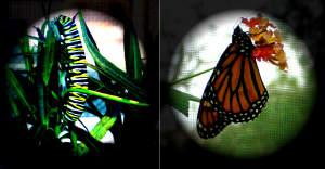 http://www.flickr.com/photos/_brilho-de-conta/ Flickr creative Commons http://creativecommons.org/licenses/by-nc-nd/2.0/deed.en